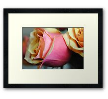 Pastel Pink and Yellow Rose Framed Print