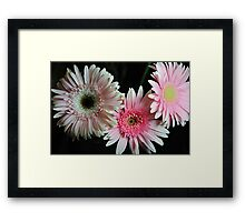 Pastel Pink Daisies Framed Print
