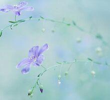 Morning Blues by Susan Gary