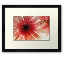 Pastel Pink daisy Center Framed Print