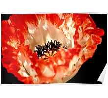 Big Fire Red Flower Poster