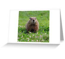 Marmota monax Plate #1 Greeting Card
