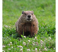 Marmota monax Plate #1 Photographic Print