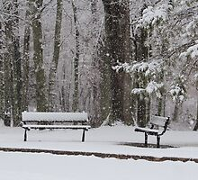 Snowy Benches by Gilda Axelrod