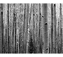Aspens on the Trail Photographic Print
