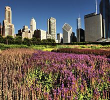 City Gardens by Barbara  Brown