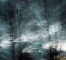 Amazing Tree Abstracts Series 5 by M Sylvia Chaume