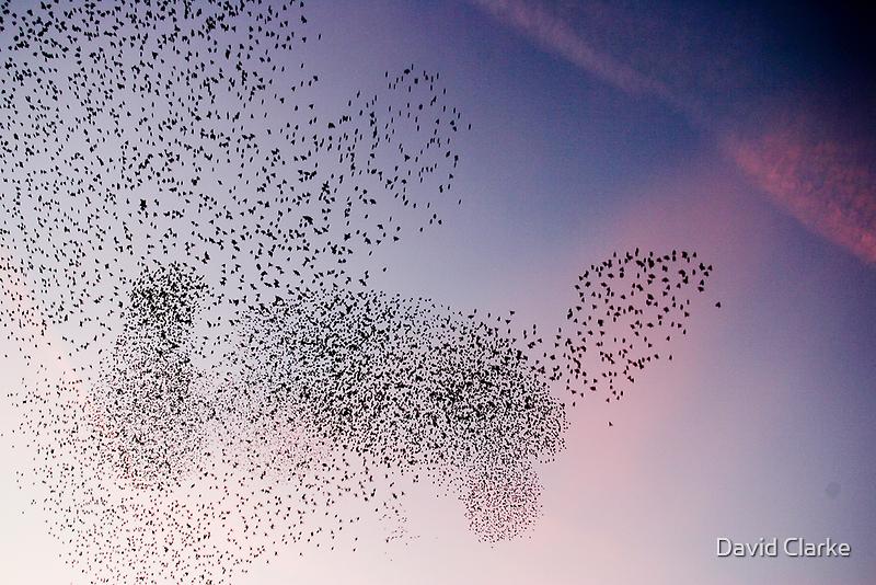 Starling Cloud by David Clarke