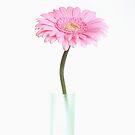 Gerbera in a vase by Cristina Rossi