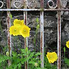 Yellow Poppies by catherine bracegirdle