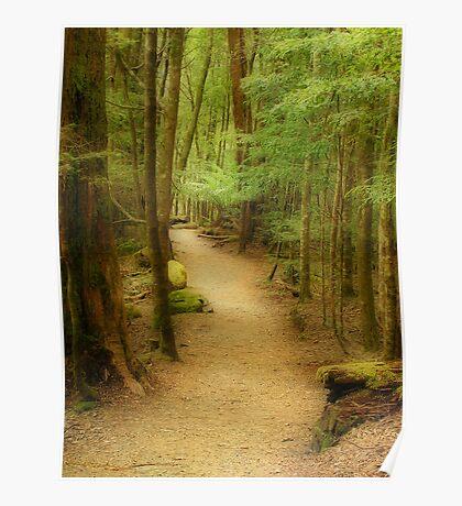Bush Path Poster