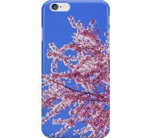 Blue Sky Spring Pink Sunlit Flower Tree Blossoms iPhone Case/Skin