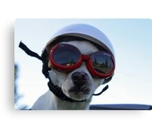 Chihuahua and the Bike Safety Message Canvas Print