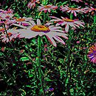 Daisies by Jenebraska