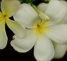 Thai Flowers II by Louise Fahy
