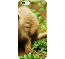 Cute Asian Palm Civet
