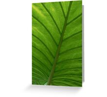 #100  Green Leaf Macro Greeting Card