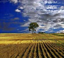 The Land by charlena