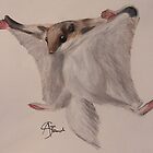 Flying Squirrel by angieschlauch
