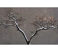 Urban Nature Photographic Print