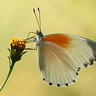 A well balanced butterfly by Graeme M