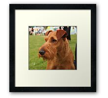 Cool Fox Terrier Wire Coat Framed Print