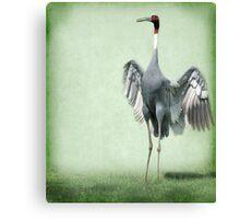 Sarus Crane Canvas Print