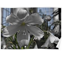 Glasshouse Orchid Poster
