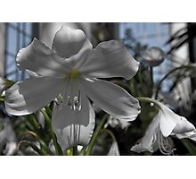 Glasshouse Orchid Photographic Print