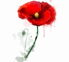 Red Poppy watercolor painting by Thubakabra