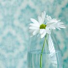 Daisies by AndreaMcClain