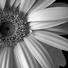 Monochromatica 2 Right side by Ghelly