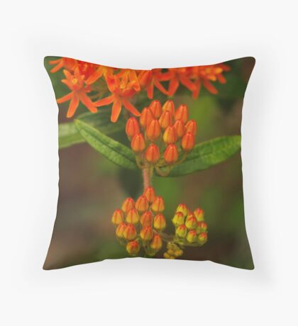 Butterfly Weed Throw Pillow