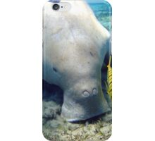 Pretty Dugong