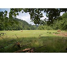 open meadow Photographic Print