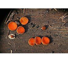 Eyelash Fungus Photographic Print