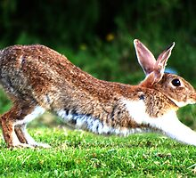 Rabbit Stretching by Nick Leech