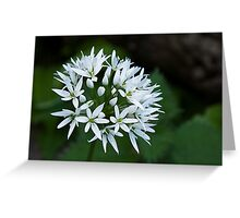 Wild Garlic Greeting Card