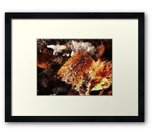 """Banksia Brushes"" Framed Print"