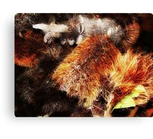 """Banksia Brushes"" Canvas Print"