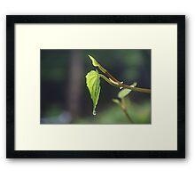 The Leaf & the Droplet Framed Print