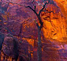Burning Tree, zion by photosbyflood