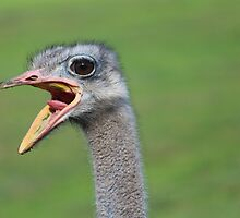 Oh my god, its an ostrich! by emilyzahra