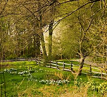 Springtime in New England by Monica M. Scanlan