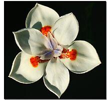 Six Petals Photographic Print