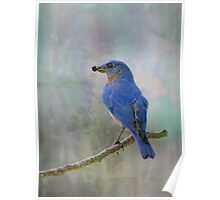 My Friend, Mr. Bluebird Poster