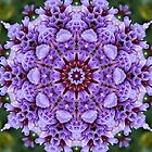 Beautiful Mandala Calendar by Marilyn Baldey
