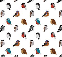 Beautifully Designed Bird Breed Images by Claire Stamper