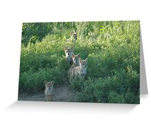 Coyote Clan Greeting Card