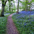 Pathway Through the Bluebells by AnnDixon